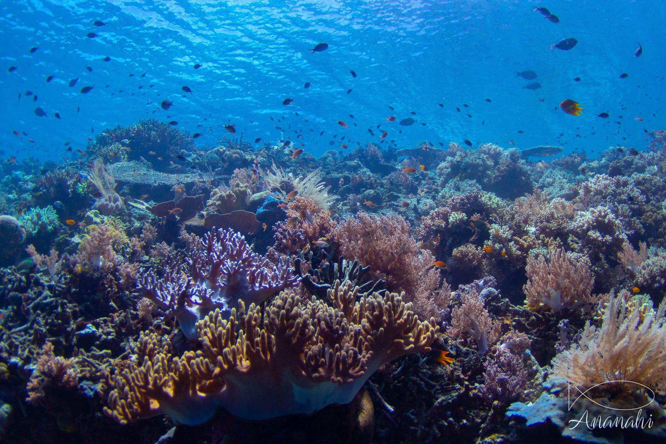 Coral of Raja Ampat